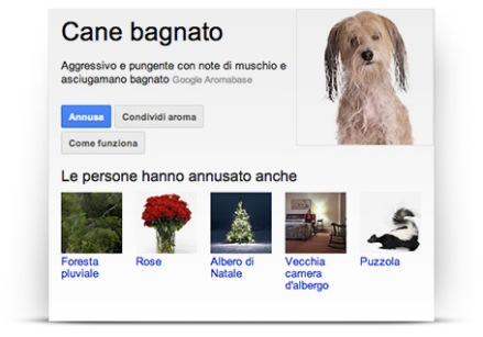 google nose_cane bagnato