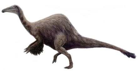 Dal Museo di Storia naturale di Londra
