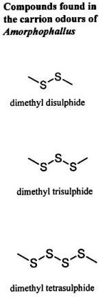 compound2